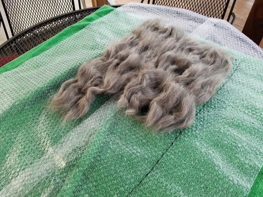 Laying out the tufts of wool