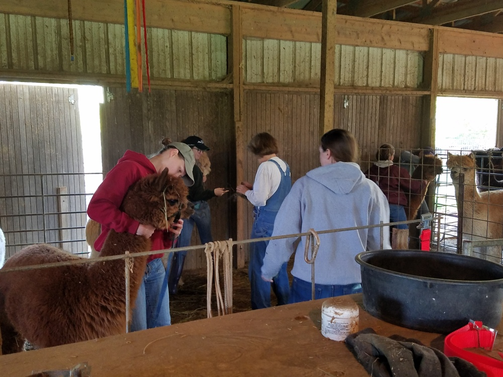 vet students with alpacas