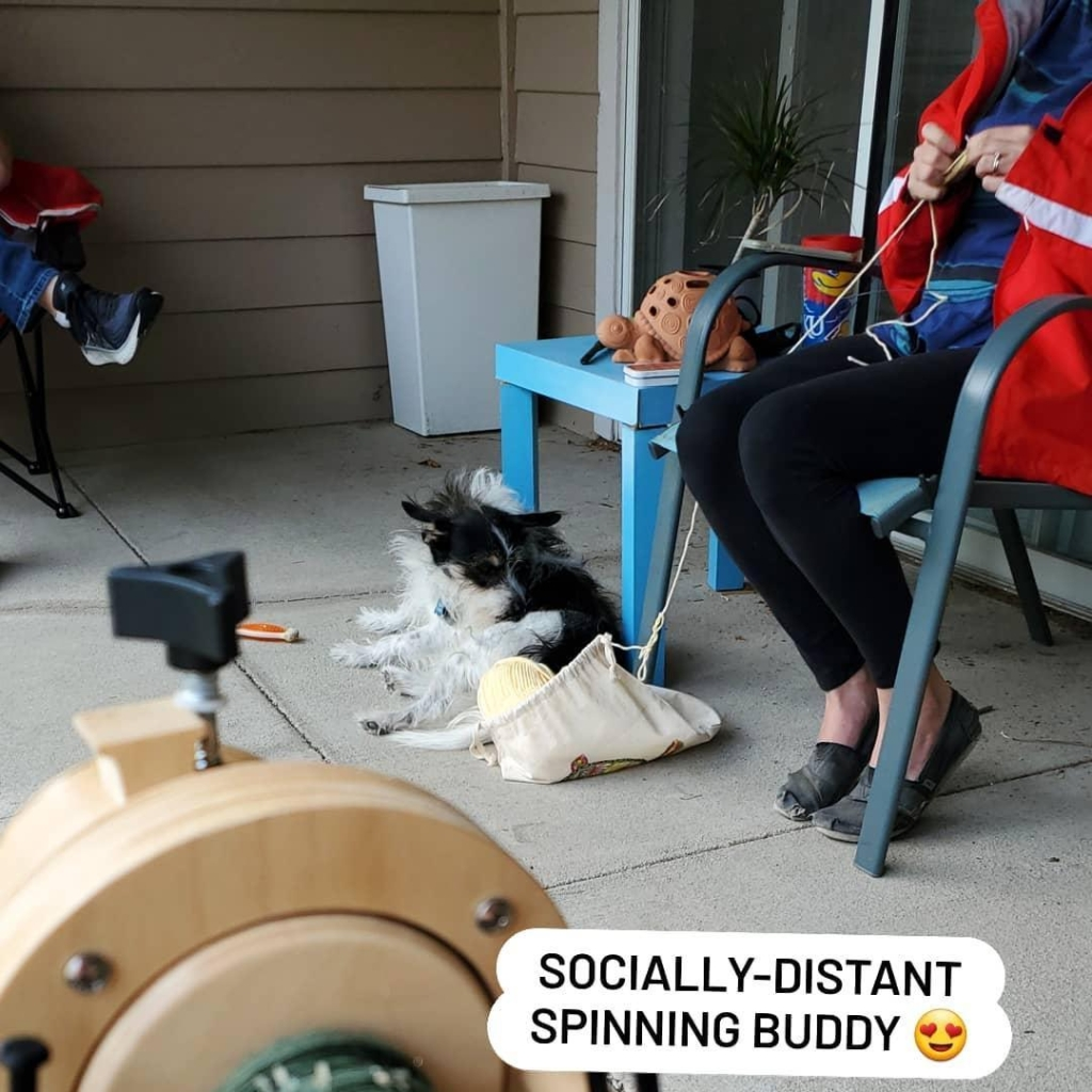 """A small black-and-white dog a ways away with the caption """"Socially Distant Spinning Buddy"""""""