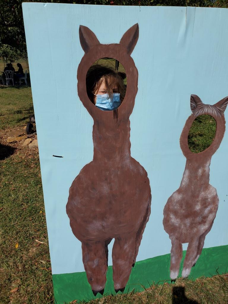 Ben's masked face in an alpaca photo op