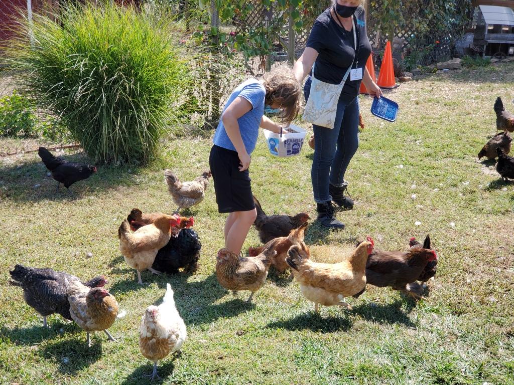 Ben feeding chickens